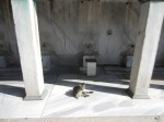 Cat washing itself outside the Blue Mosque
