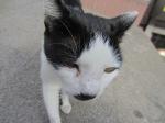Hitler cat!
