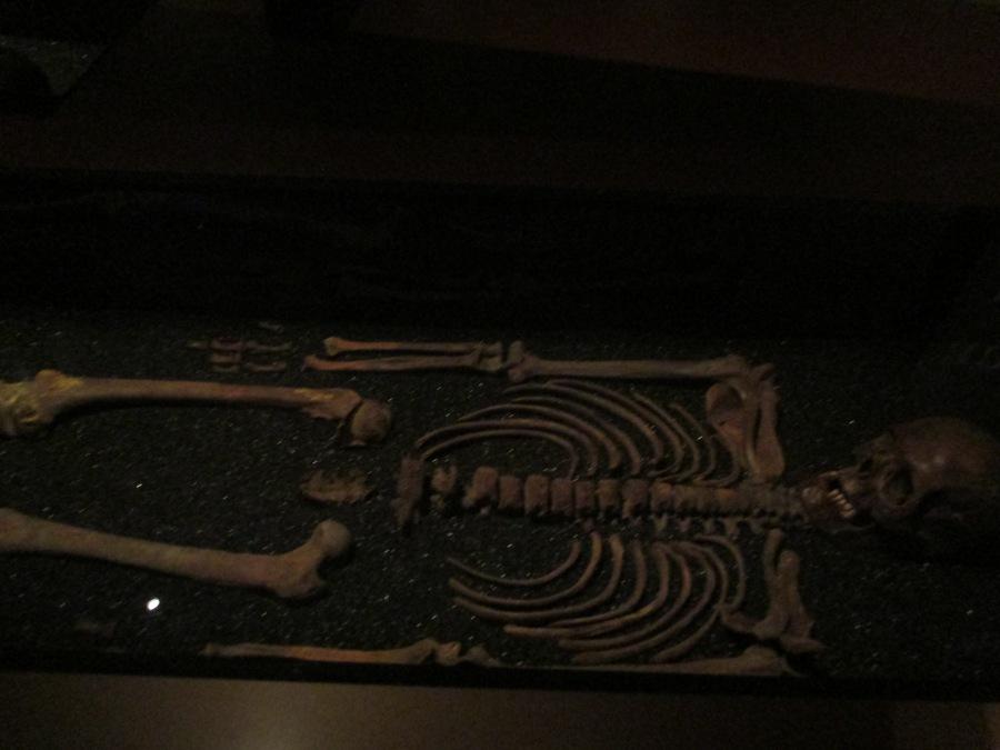 Skeleton found in the Vasa, Vasa Museum