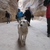 A dog keeping us company in the Siq.